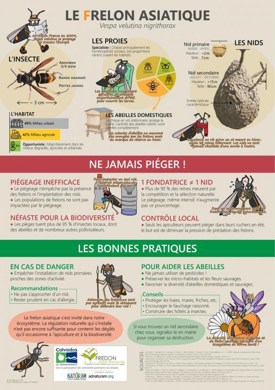 Affiche fredon frelon asiatiquevert
