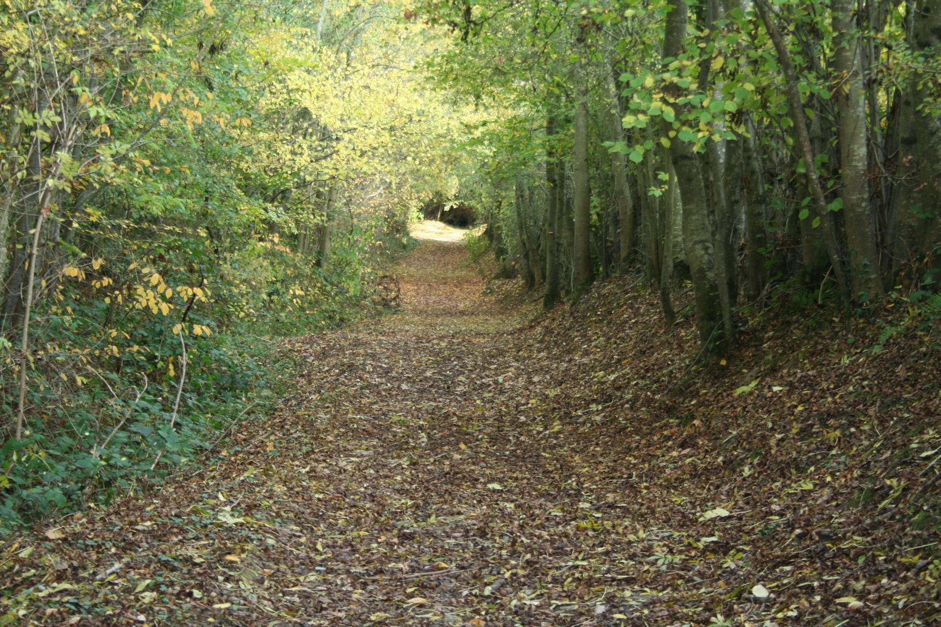 Chemin de Noyers-Missy